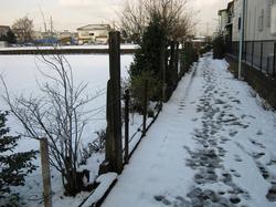 snow_100202_1.jpg