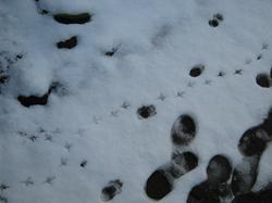 snow_100202_2.jpg